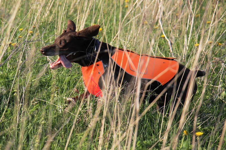 Сигнальный жилет для охотничьей собаки SV-1 Signal Armor