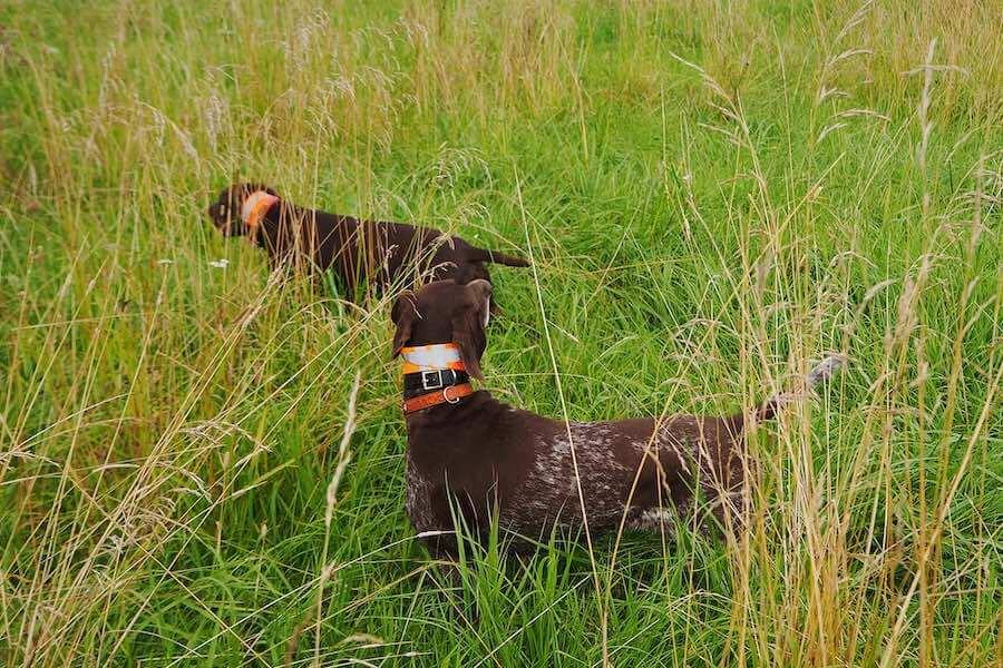 Ошейник для охотничьих собак COL-1 со скидкой в комплекте