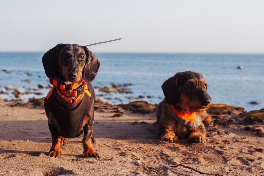 Плавательный жилет для собак из неопрена NV-3 Orange Hunter II
