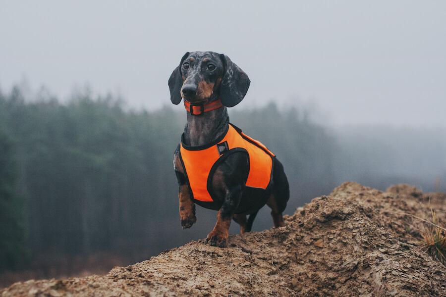 Защитный жилет для собак SV-2 Signal Armor